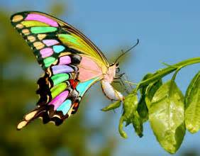 картинки красивые бабочки бесплатно