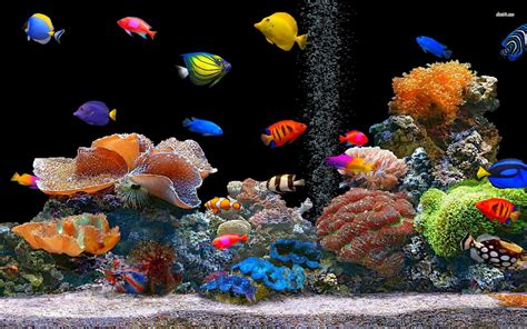 imagenes wallpaper gratis peces de colores hd wallpaper gratis fondo de pantallas