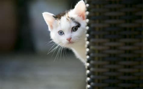 cool cat hd wallpaper  images