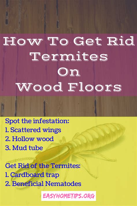 how to get rid of termites with wings in house how to get rid of termites with wings in house 28 images how to get rid of
