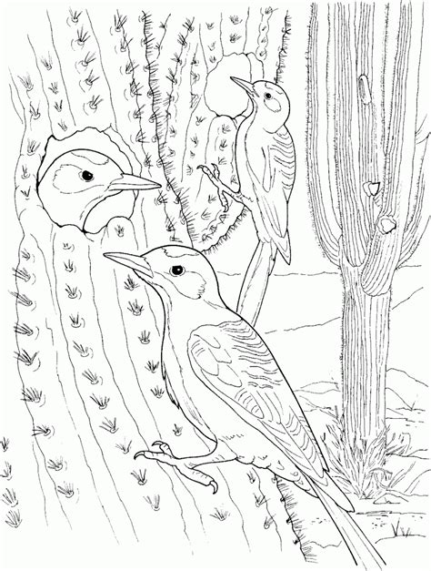 Free Printable Cactus Coloring Pages For Kids Cactus Coloring Page