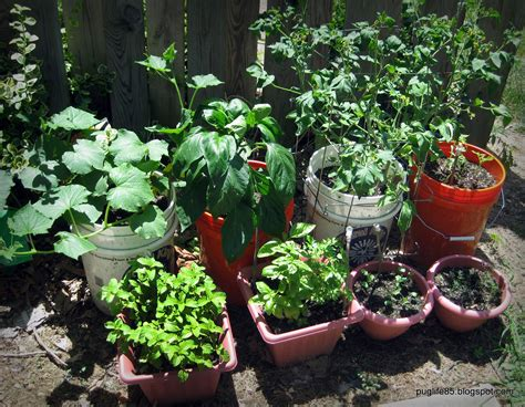 Diy Container Vegetable Garden Update This Pug Life Container Gardens Vegetables