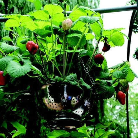 vaso orto un orto in vaso per i bambini quali piante scegliere