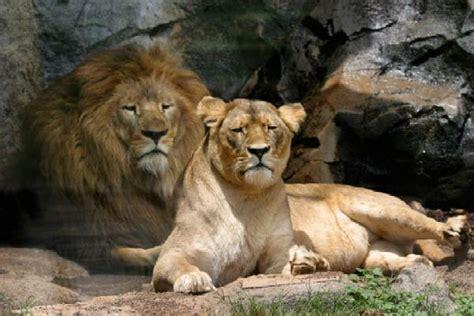 imagenes asombrosas de animales fotos vdeos e imgenes graciosas de animales tattoo