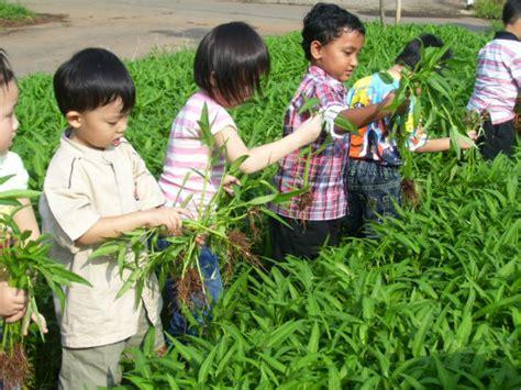 sumber gambar kerajinantangantop blogspot com sudahkah kita berterimakasih kepada petani tanpa mereka