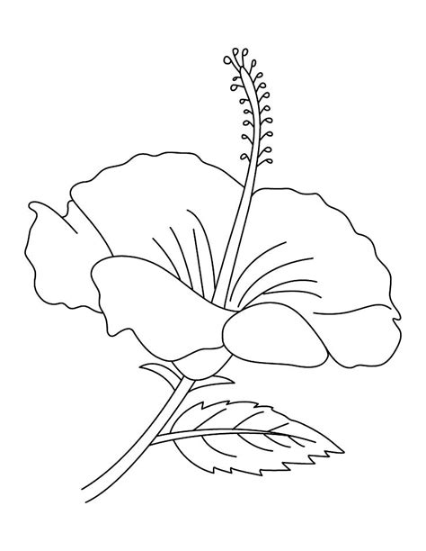 hibiscus flower coloring pages free printable hibiscus coloring pages for kids
