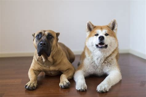 why do dogs shed why dogs shed and how to reduce shedding in dogs
