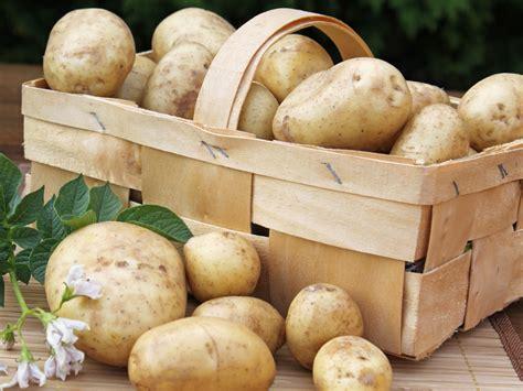 wann werden kartoffeln gesetzt kartoffeln saison wann ist kartoffeln zeit alnatura