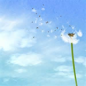 Dandelion Duvet Illustration Gratuite Arri 232 Re Plan Pissenlit Ciel Bleu