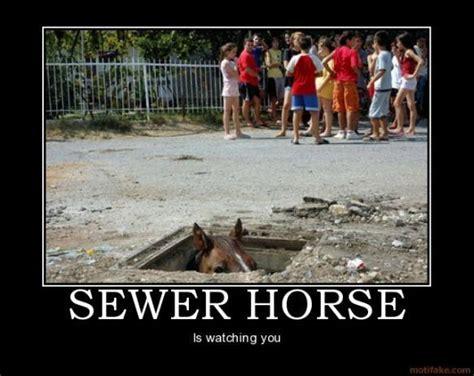 Horse Meme - sewer horse basement horse know your meme