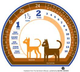 how to calculate a cat s age in cat years catster