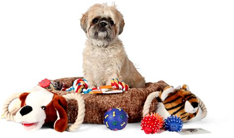 puppy supplies cheap how to find discount pet supplies