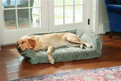 camas grandes para perros m 225 s de 25 ideas incre 237 bles sobre grandes camas para perros