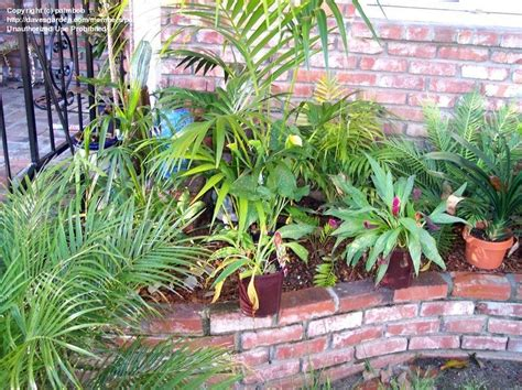 Yard Planters by Viewing An Image Of Quot Front Yard Planters Quot