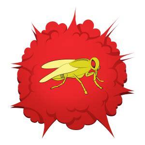 works fruit fly barpro  number  fruit fly killer  america