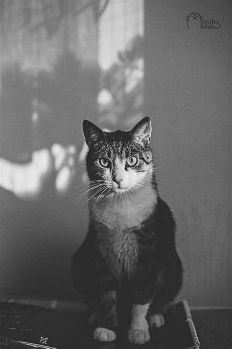 Gatti in bianco e nero - KEBLOG