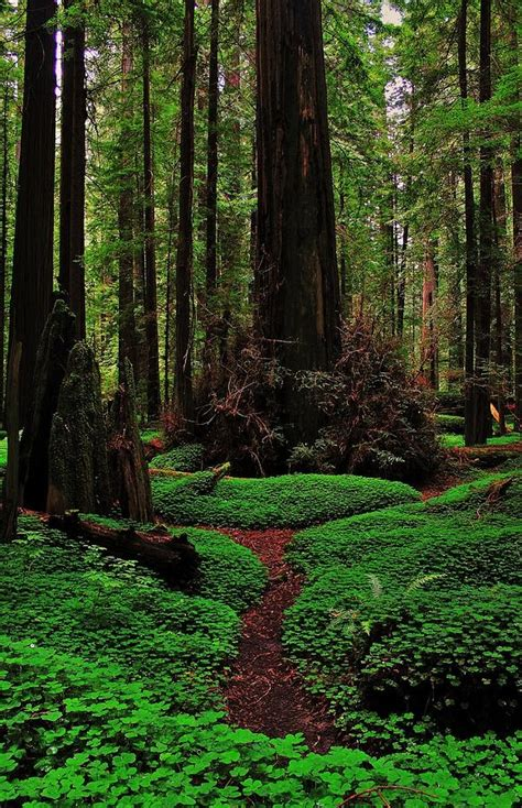 most beautiful parks in the us 15 most beautiful national parks in america 99traveltips