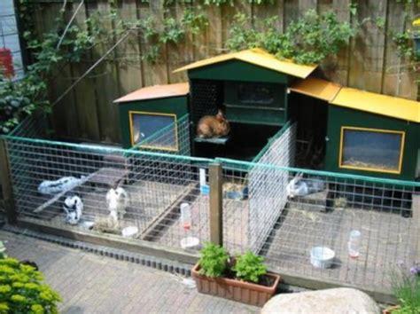 Harga Makanan Kelinci Anggora cara membuat kandang kelinci sendiri murah