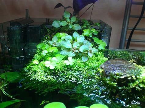 Aquascape Aquarium Plants by 39 Best Images About Bog Filter On The