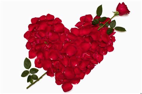 imagenes rosas san valentin imagenes de san valentin con rosas