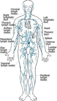 Lymph Node Detox Bath by 1000 Images About Lymph Nodes On Lymph Nodes