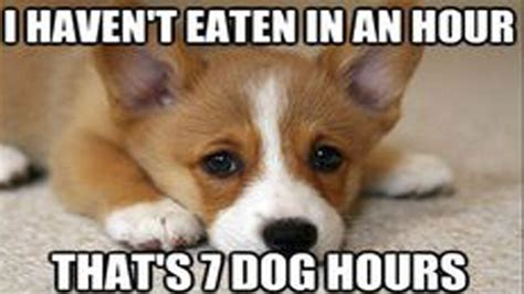 hungry puppy amazing hungry memes that we can all totally relate to