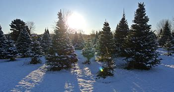 christmas tree farm in chicagoland area search results in tree farms listing results