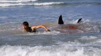 New jersey shark attacks of 1916 hubpages