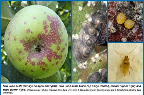 san jose scale wisconsin horticulture