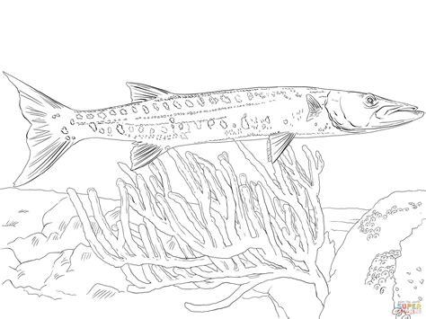 barracuda fish coloring page great barracuda coloring page free printable coloring pages
