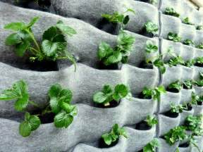 Vertical Garden Plants Www Homegrown Org 187 Archive Plants On Walls An Easy