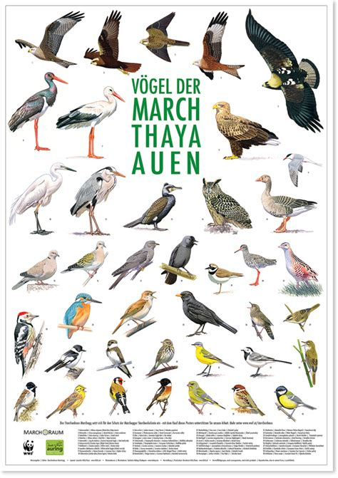 vogelposter bird posters birding and bird photography
