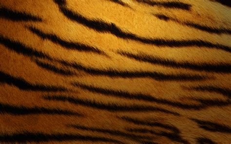 tiger print full hd wallpaper and background image tiger skin wallpapers hd wallpapers id 11106