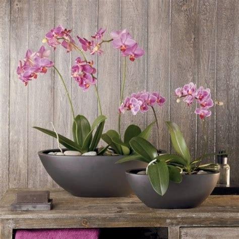 garden orchids and roses auf pinterest orchideen dfte tipps orchideen pflege lila kies schalen dekoration