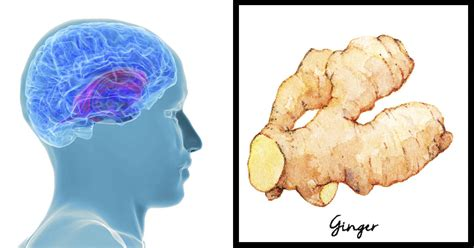 ginger is a disease ginger fights alzheimer s the same way as drugs do