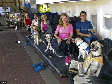 Can Dogs Fly In Cabin by For 349 Your Pet Can Learn To Fly On A Plane Thanks
