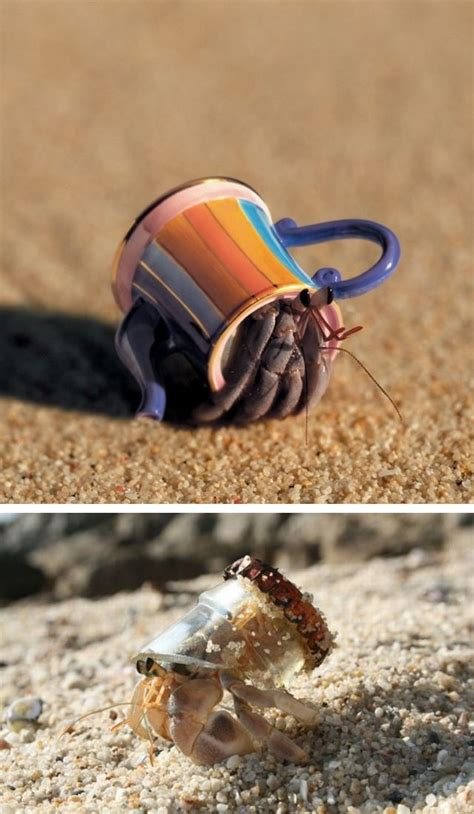 do hermit crabs need a heat l 17 best images about pet hermit crabs on pinterest