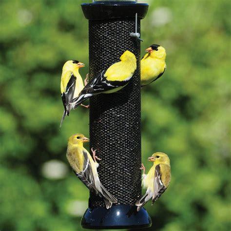 feeders  products  solve bird feeding problems hgtv