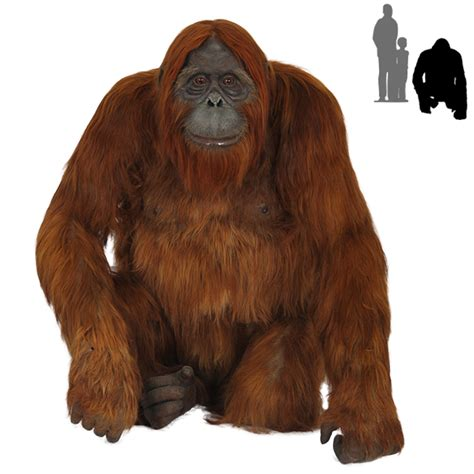 Home Decor And Furniture by R 015 Orangutan With Real Hair Protheme Global