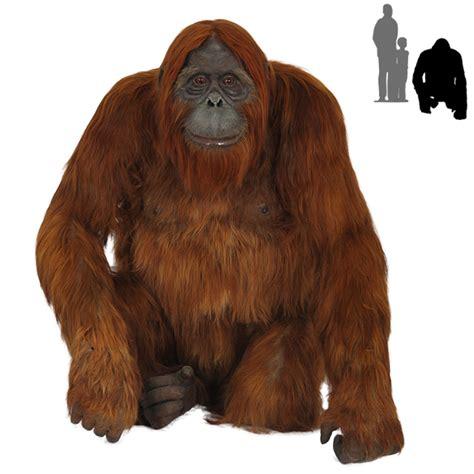 Brown And Orange Home Decor by R 015 Orangutan With Real Hair Protheme Global
