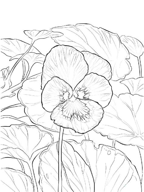purple violet flower coloring page violet coloring pages free printable violet best free