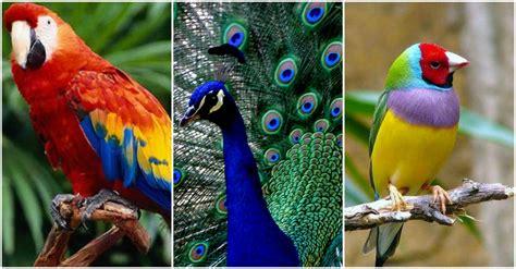 imagenes de aves asombrosas las 10 aves m 225 s bellas del mundo 161 realmente hermosas