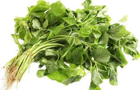 manfaat daun bayam dan khasiatnya bagi kesehatan tubuh