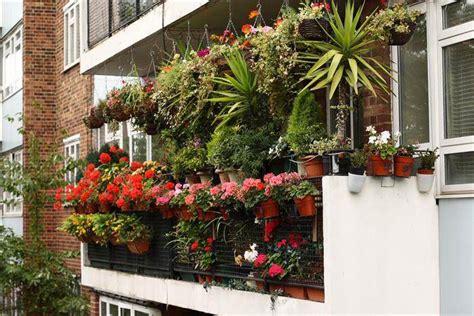 Flowers For Balcony Garden Balcony Garden 1001 Gardens