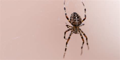 Kill Spiders In House by Another Person Sets Their House On While Trying To