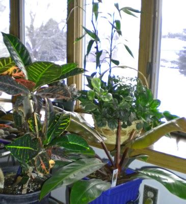 types of tropical house plants houseplants clean indoor air pollution home top plants