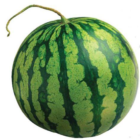 Water Melon flavors of brazil fruits of brazil watermelon melancia