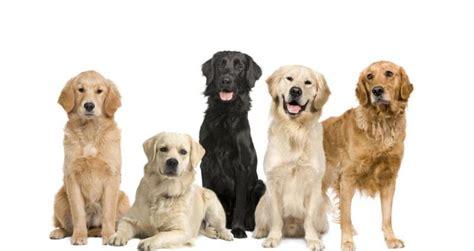 imagenes de animales y cosas 5 cosas que no sab 237 as sobre los perros batanga