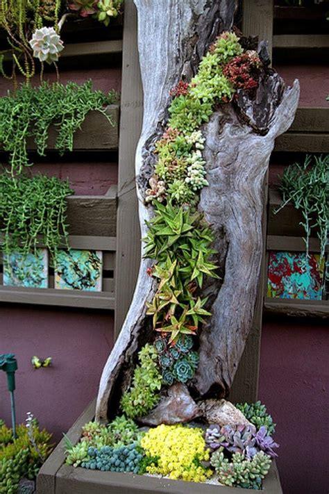 Turtle Succulent Planter by 50 Best Succulent Garden Ideas For 2017