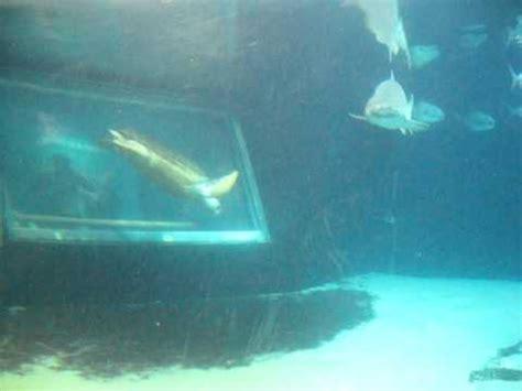Tlf 45 Shark shark attack turtle sting new york aquarium